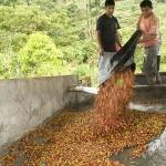 Perú: Junín triplicó número de unidades productivas rurales incorporadas al uso intensivo de la elec...