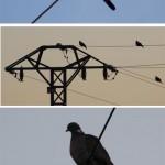 ¿Porqué no se electrocutan los pájaros que se posan sobre las líneas de alta tensión?