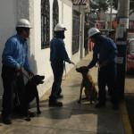 Perú: Canes encuentran fallas eléctricas subterráneas en segundos