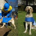 Chile: REX, el primer perro rastreador de fallas eléctricas del mundo