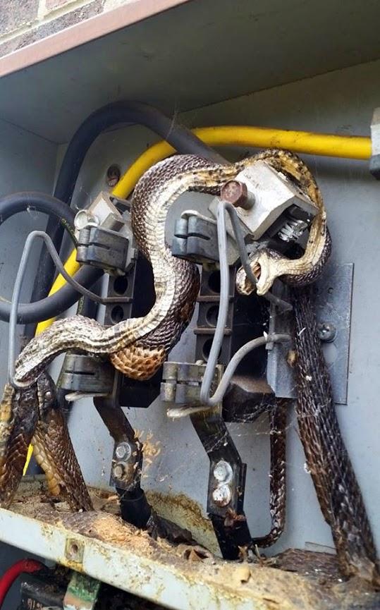 Falla por serpientes