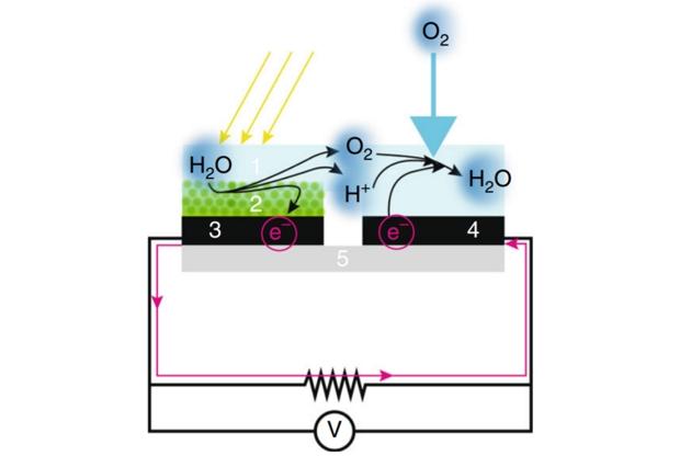 Reacciones que hacen posible producir electricidad con la ayuda de bacterias