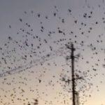 Cortocircuito originado por una bandada de pájaros