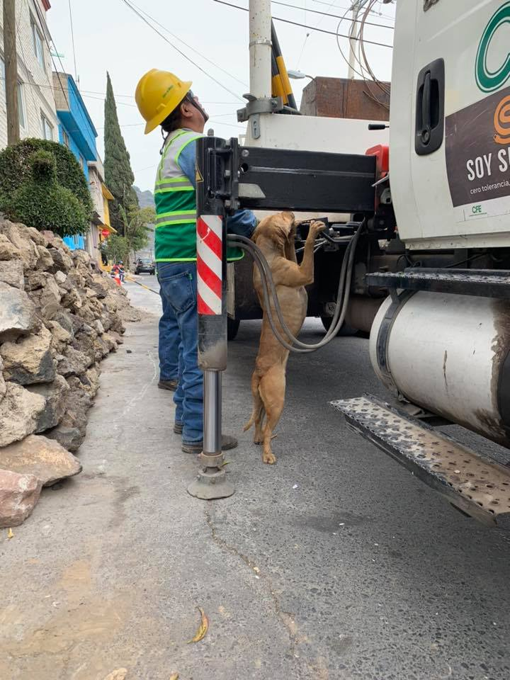 perro-ayudante