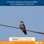 ¿Por qué a tensiones mayores a 220kV no se ven pájaros montados?